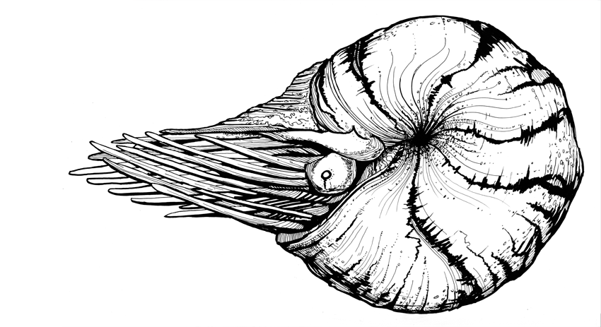 cephalopod, pen and ink illustration by tbSMITH